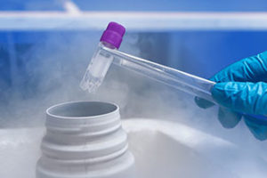 Использование замороженного эмбриона